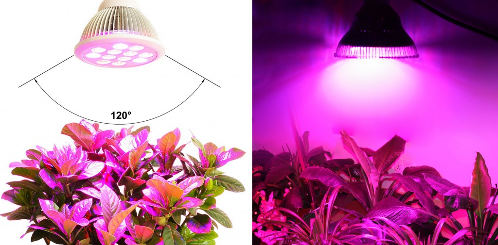 правильное размещение лампы для подсветки цветов