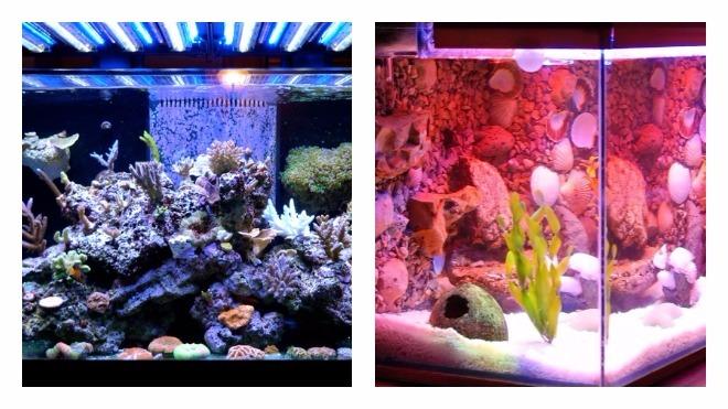 оптимальный уровень света в аквариуме
