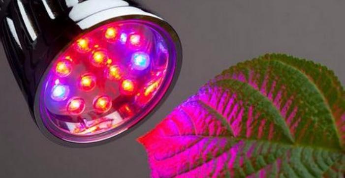Спектр светодиодной фитолампы