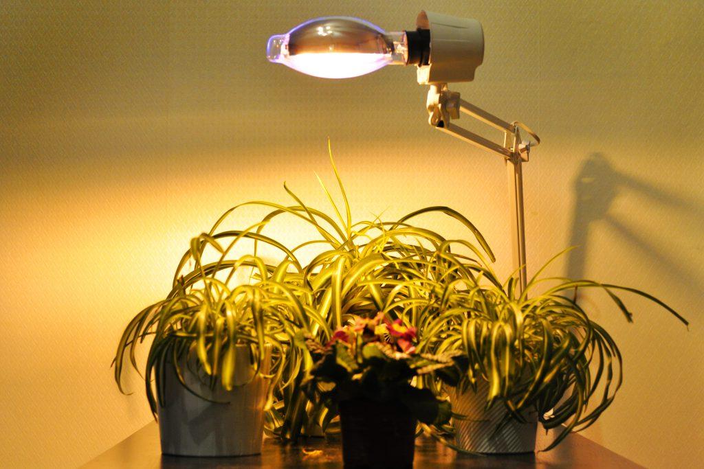 Люминесцентная подсветка для цветов