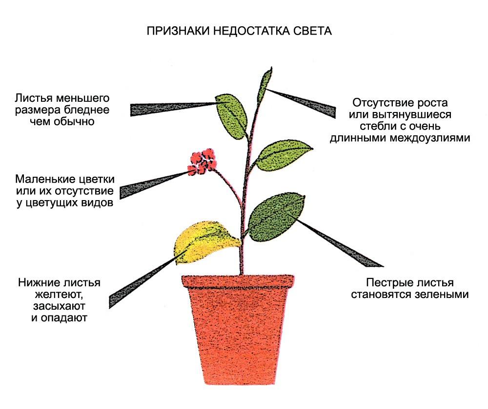 признаки недостатка света для цветов
