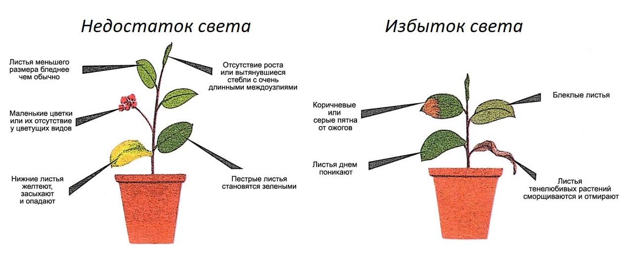 Внешние признаки недостатка или избытка света для растений