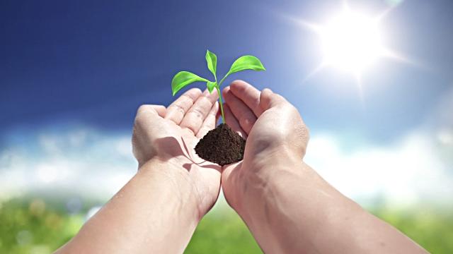 Свет необходим растениям как источник энергии для фотосинтеза и накопления органического вещества