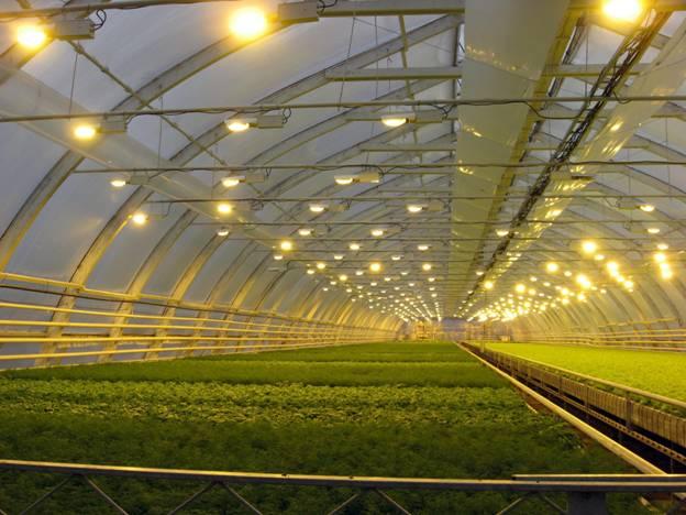 Использование ртутных ламп дИспользование ртутных ламп для освещения парниковля освещения парников