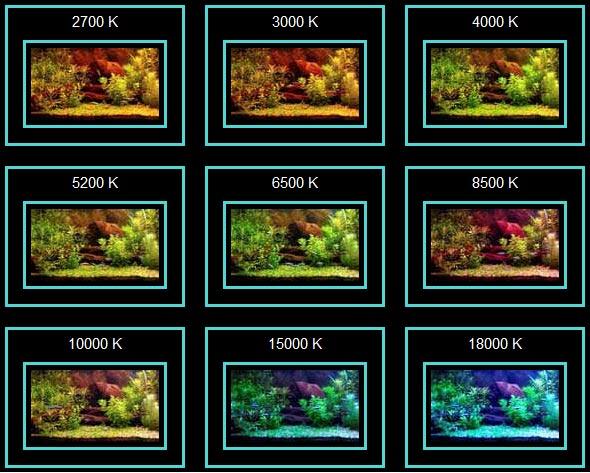 цветовая температура для аквариумов какую выбрать