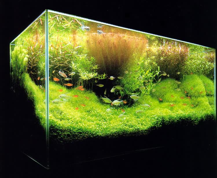Нафото- аквариум Такаши Амано