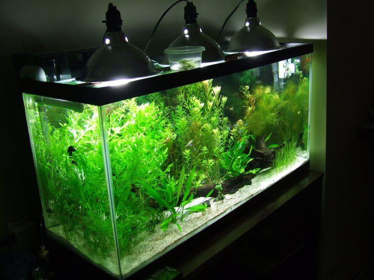 Световой режим в аквариуме очень важен